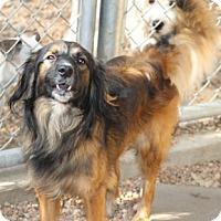 Adopt A Pet :: Buster Brown - Meet Him!! - Norwalk, CT