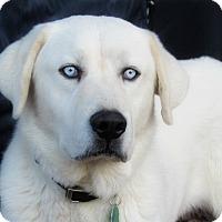 Adopt A Pet :: Pilgrim - Kyle, TX