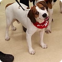 Adopt A Pet :: Barney - Grafton, WI