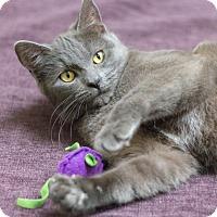 Adopt A Pet :: Zephyr - Chicago, IL