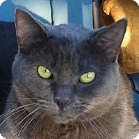 Adopt A Pet :: Ashley - Yorba Linda, CA