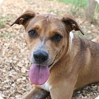 Adopt A Pet :: Sebastian - Palmetto Bay, FL
