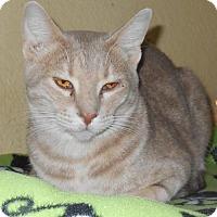 Adopt A Pet :: Lavender Lily - Glendale, AZ