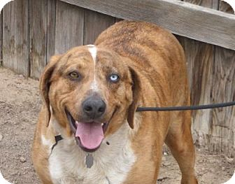 Retriever (Unknown Type) Mix Dog for adoption in Evans, Colorado - Sammy