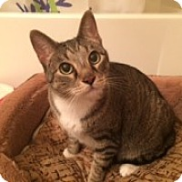Adopt A Pet :: Pinky - McHenry, IL