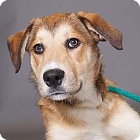 Adopt A Pet :: Thelma - Sudbury, MA