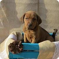 Adopt A Pet :: Diva - Joliet, IL