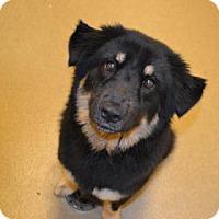Adopt A Pet :: S/C Sadie - Miami, FL