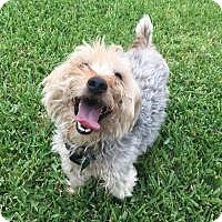 Adopt A Pet :: Timmie - Katy, TX