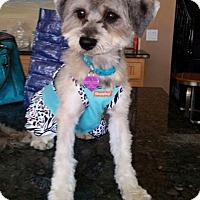 Adopt A Pet :: Eliza - San Dimas, CA