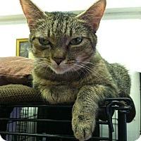 Adopt A Pet :: Bean - Acushnet, MA