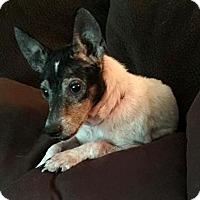 Adopt A Pet :: Teeka - Elyria, OH