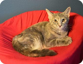 Domestic Shorthair Cat for adoption in Sterling Heights, Michigan - Millie