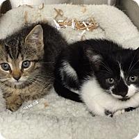 Adopt A Pet :: Summer & Winter - Ardsley, NY