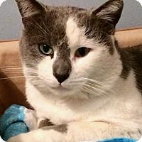 Adopt A Pet :: Tinker - Colmar, PA