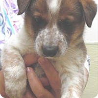 Adopt A Pet :: Myles - Waupaca, WI