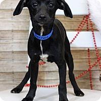 Adopt A Pet :: Bernard - Waldorf, MD