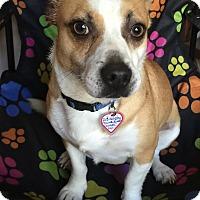Adopt A Pet :: Sidney - Lodi, CA