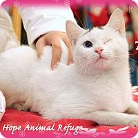 Adopt A Pet :: Tiny - Waterbury, CT