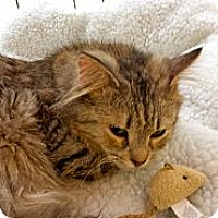 Adopt A Pet :: Lynx - Orillia, ON