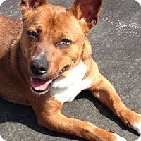 Adopt A Pet :: Marco - Brattleboro, VT