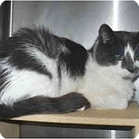 Adopt A Pet :: Jenna - Colmar, PA
