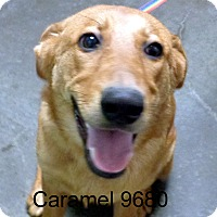 Adopt A Pet :: Caramel - baltimore, MD