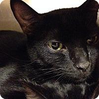 Adopt A Pet :: Curtis - Muncie, IN