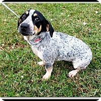 Adopt A Pet :: Pepper - Charlemont, MA