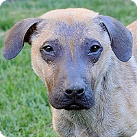 Adopt A Pet :: CHAROLETTE VON CALBE. - Los Angeles, CA