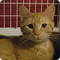 Adopt A Pet :: Mookie - Winchendon, MA