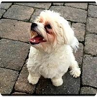 Adopt A Pet :: Sullivan (ETAA) - Plainfield, CT