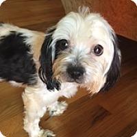 Adopt A Pet :: Harper - N. Babylon, NY
