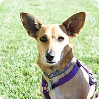 Adopt A Pet :: IZZY - Hurricane, UT