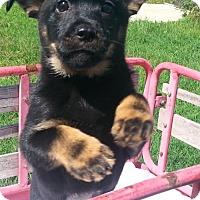 Adopt A Pet :: Reva - Seaford, DE