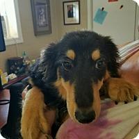 Adopt A Pet :: Dowdy - Harmony, Glocester, RI