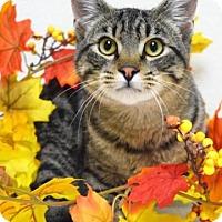 Adopt A Pet :: Gordon - Dublin, CA