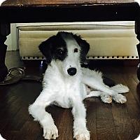 Adopt A Pet :: Jaxon - San Antonio, TX