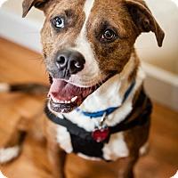 Adopt A Pet :: Apollo - Washington, DC