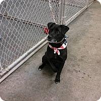 Adopt A Pet :: Seven - Towson, MD