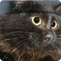 Adopt A Pet :: 328877 - Wildomar, CA