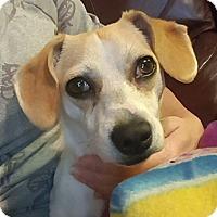 Adopt A Pet :: Vanilla - Colton, CA