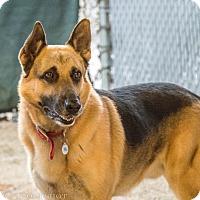 Adopt A Pet :: Hogan - Phoenix, AZ