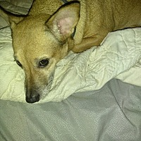 Adopt A Pet :: Ezra - Powder Springs, GA