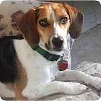Adopt A Pet :: Billy Ray - Novi, MI