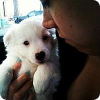 Adopt A Pet :: Shane - Scottsdale, AZ