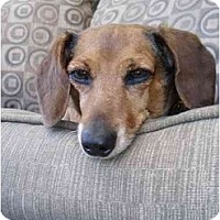 Adopt A Pet :: BAILEY - Portland, OR