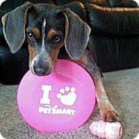 Adopt A Pet :: Grasyn - Novi, MI