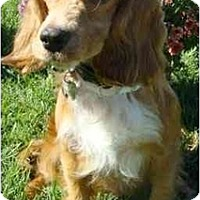 Adopt A Pet :: Jack - Sugarland, TX