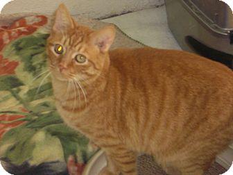 Domestic Shorthair Cat for adoption in Alden, Iowa - Dickens